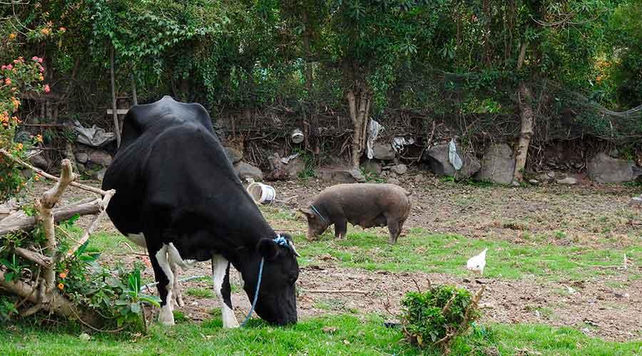 Accommodation and Meals Otavalo Indigenous Community