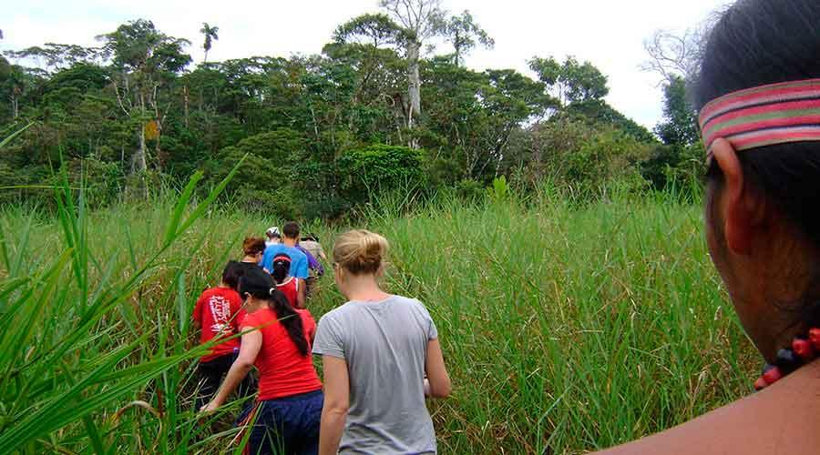 Jungle Journeys