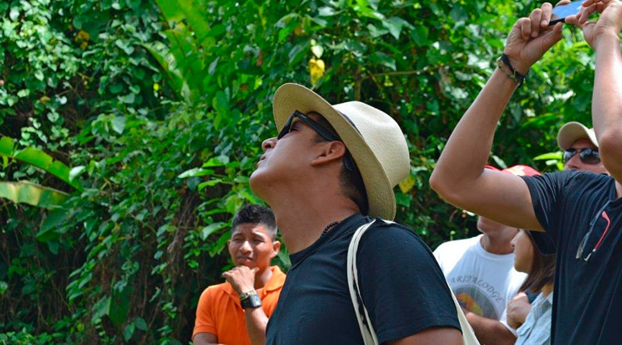 Observing Wildlife