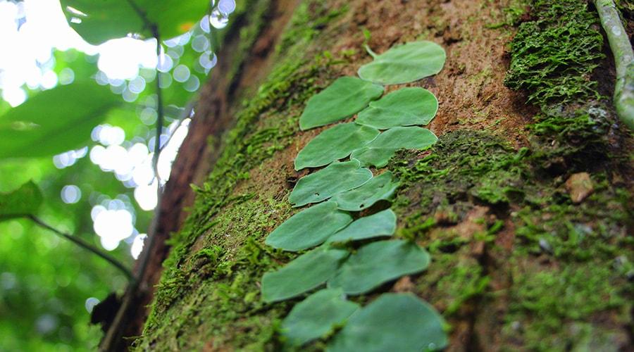 The Amazon Jungle