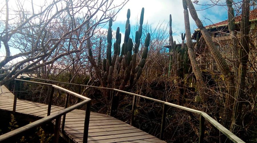 Interpretation Center, Cerro Tijeras (Frigatebird Hill)