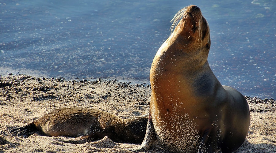 """Galapagos Islands Travelling Classroom """"The Secret of Evolution"""" - 15 Days"""